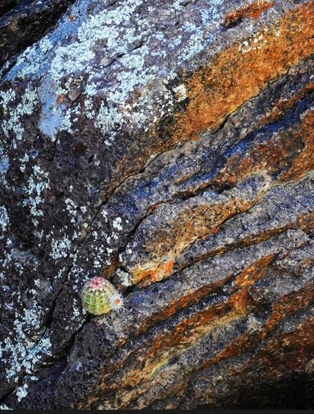 Madera Canyon Cactus On Rocks Photography Art   Galeria Mañana