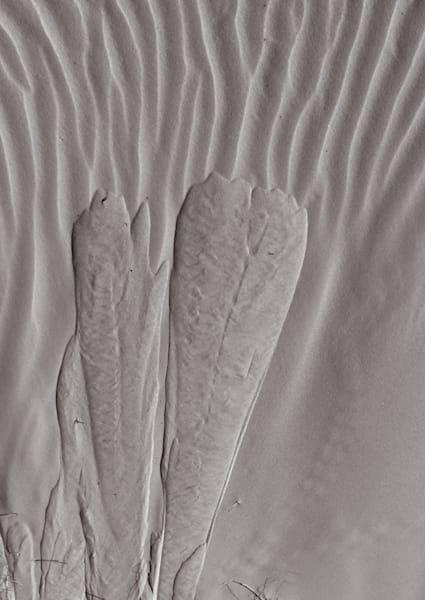 Sand Symbols Photography Art | Galeria Mañana