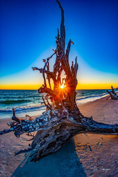 Shell Tree Lovers Key Beach Florida Photography Art | vitopalmisano