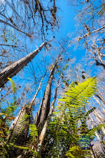 Big Cypress Fern Art | Brandon Hirt Photo
