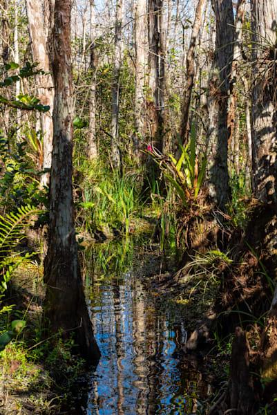 Swamp River Art | Brandon Hirt Photo