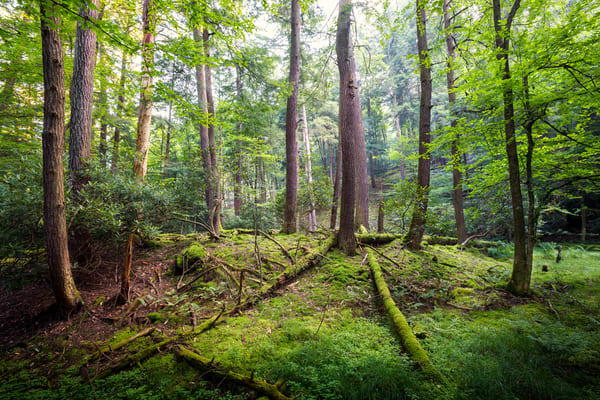 Cooks Forest Pa Photography Art   Mark Steele Photography Inc