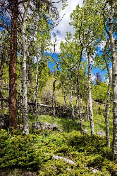 Rocky Mountain National Park Photography Art   Mark Steele Photography Inc
