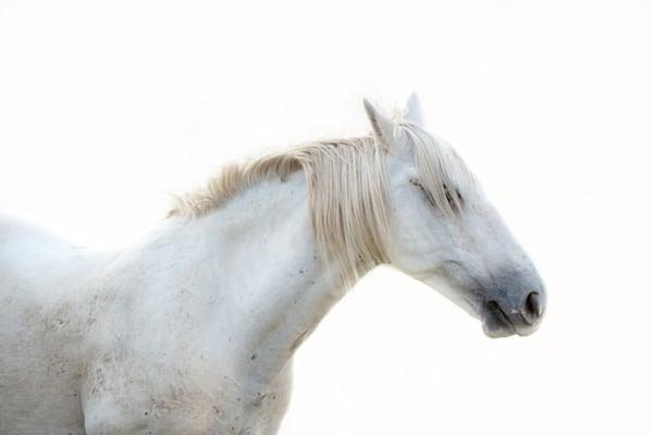 White Horse #4