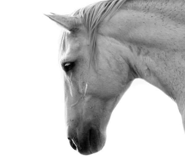 White Horse #1 Photography Art | Jae Feinberg Fine Art Photo