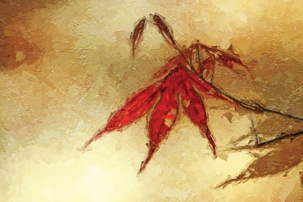 Japanese Maple Leaf painting/ Shop fine art photography by An Artist's View Photography