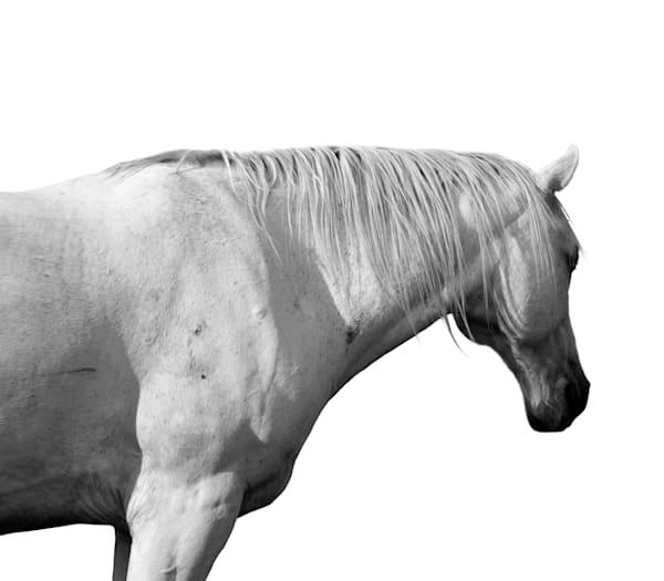 White Horse #3 Photography Art | Jae Feinberg Fine Art Photo