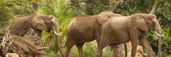 Elephant March Photography Art | artbysmiths