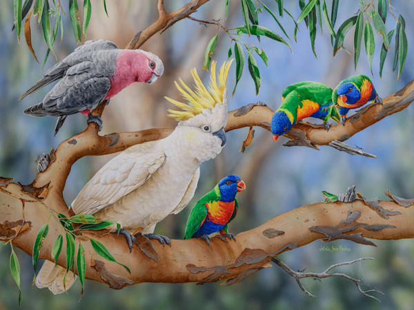Colourful Crowd - Galah with Sulphur-crested Cockatoo, Rainbow Lorikeets and Eastern Dwarf Tree Frog | Australian Native Wildlife