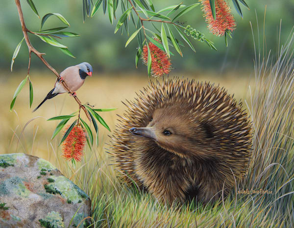 Chance Meeting - Echidna with a Long-tailed Finch |