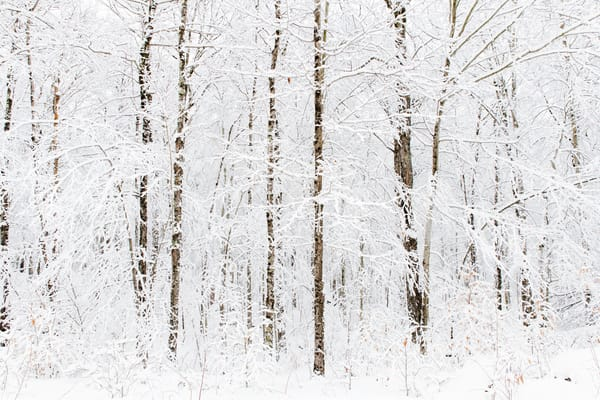 Winter Trees 2020 Photography Art | Kurt Gardner Photogarphy Gallery