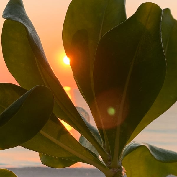 Shop Cancun Beach Sunrise Fine Art Travel Photography by Marie Stephens Art