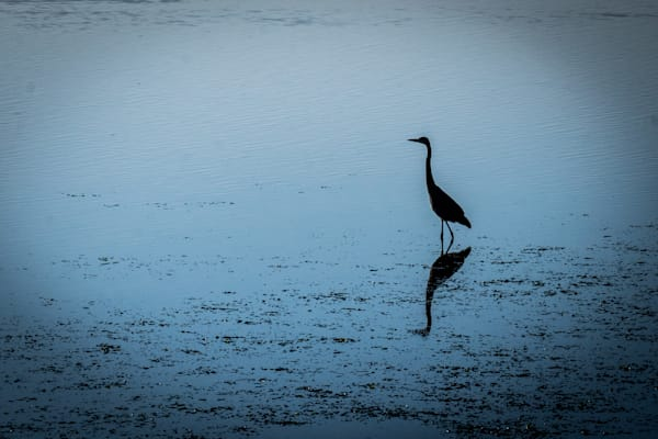 Egret Silhouette - California wildlife bird photographic print