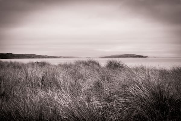 Sea Grass in Black and White - Northern California coast landscape photograph print