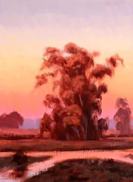 Wetland Reflections, Eucalyptus  Art | Terry Sauve Fine Art