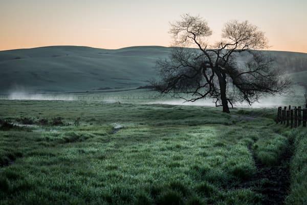 Morning Mist - Petaluma California country sunrise landscape photograph print