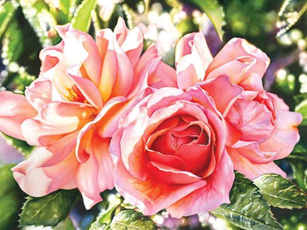 Rose #3 Original watercolor painting