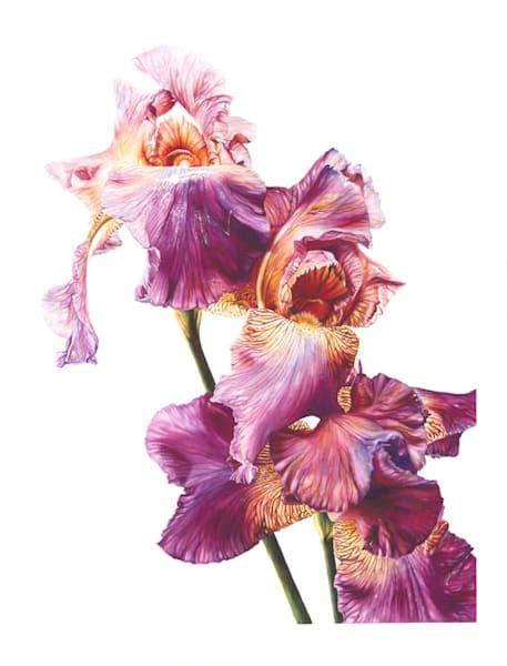 Botanical Iris #2 Original Watercolor Painting 24 x 18.