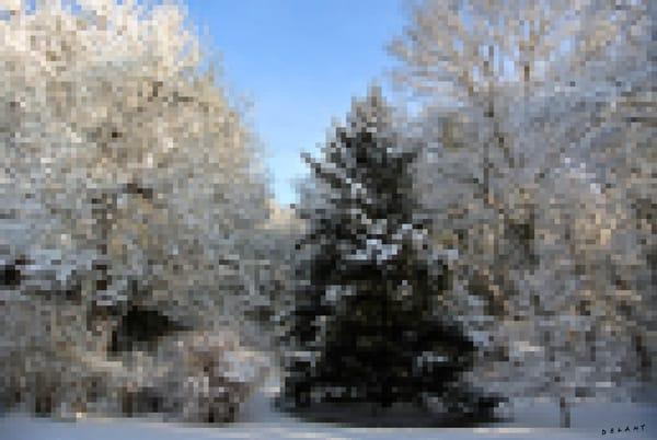 Snowy Spruce Pixilated