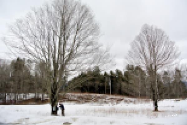 Winter Sap Run, PIXELATED