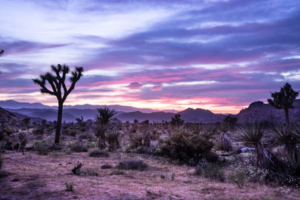 Sunset Spectacle  - Joshua Tree National Park California landscape photograph print