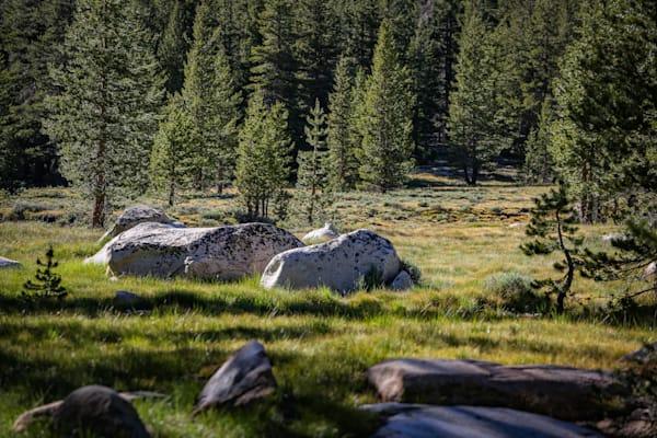 Granite Boulders, Tuolomne Meadows, CA