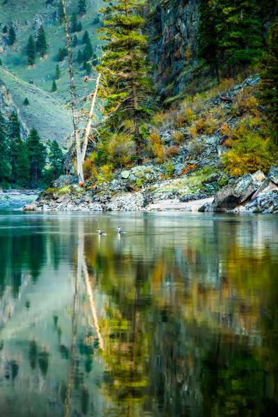 Salmon River Grebes