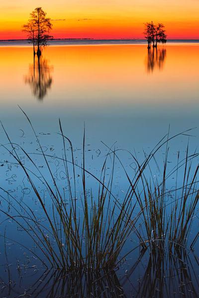 Lake Moultrie Cypress
