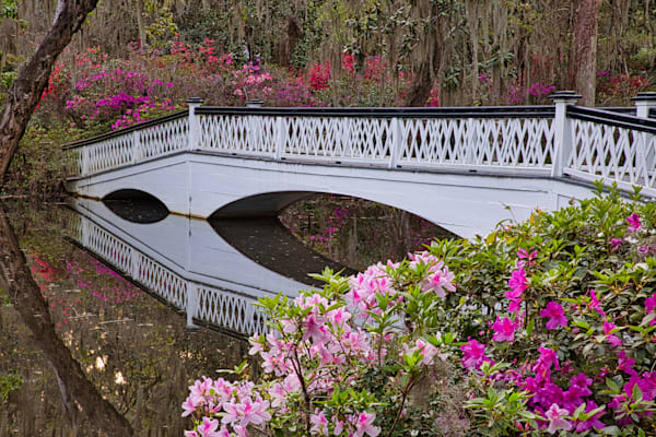Plantation Bridge and Azalea, Magnolia Plantation