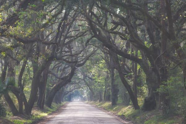 Country Oak Allee, Edisto Island
