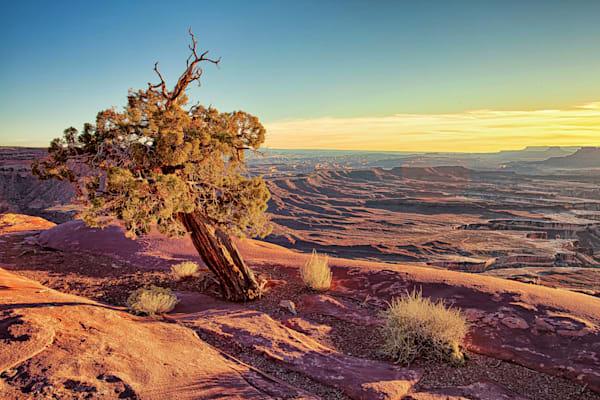 Lone tree at Canyonlands