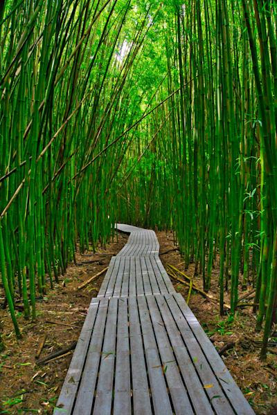 Bamboo trail, pipiwai trail Maui,