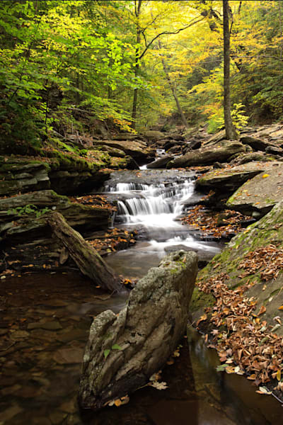 Cascades on the Creek at Ricketts Glen