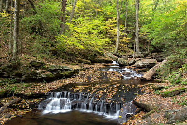 Fall in Ricketts Glen along the creek