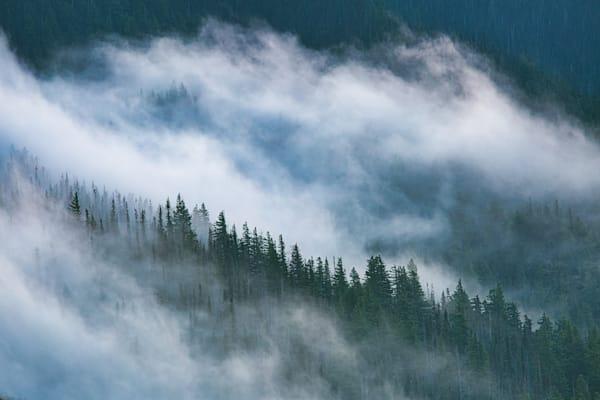 Trees in the Mist - Hurricane Ridge