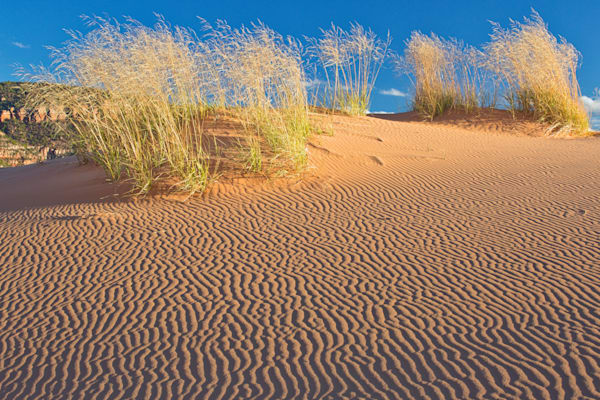 Ripples in the Sand - Coral Pink Sand Dunes