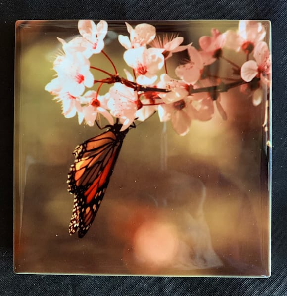 Butterfly   Marie Art Gallery