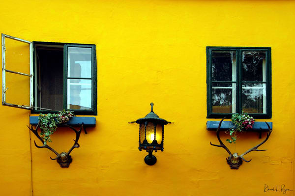 Yellow Wall with Antlers