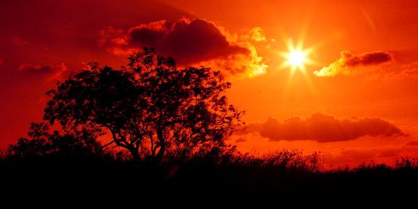 PBuzenius-Scarlet-Sunset-Red