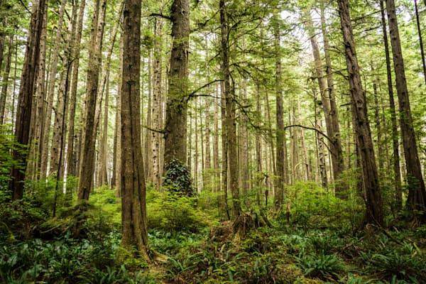 Ozette Forest - Olympic National Park Washington landscape photograph print