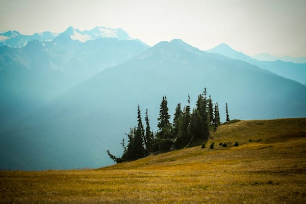 Hurricane Ridge - Olympic National Park Washington landscape photograph print