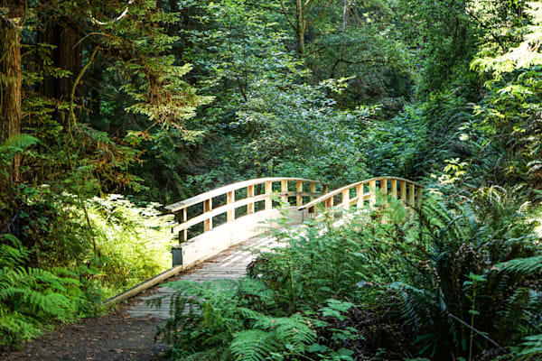 Forest Footbridge - Mendocino California landscape photograph print