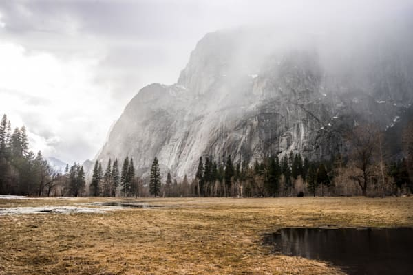 Winter Meadow - Yosemite National Park California landscape photograph print