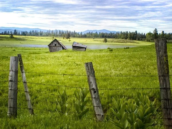 Shacks in a Meadow