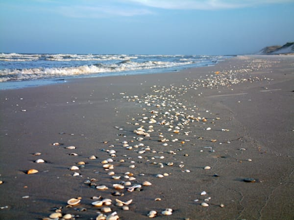MPhillip-Shells-on-Shore