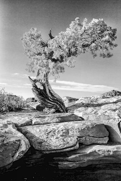 Tree Spirits 5 Photography Art | TheSpiritographer