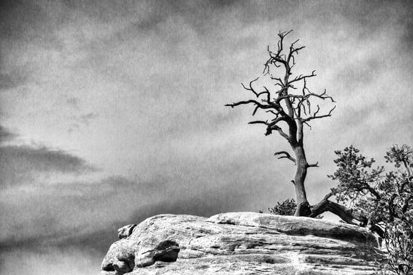 Tree Spirits 4 Photography Art | TheSpiritographer