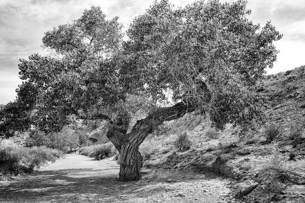 Tree Spirits 6 Photography Art | TheSpiritographer