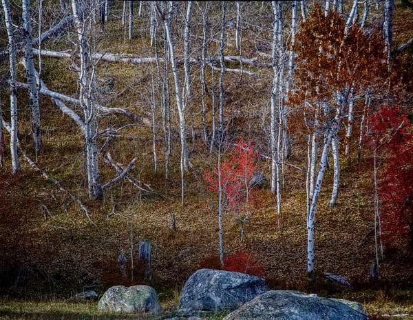 Tree Spirits 13 Photography Art | TheSpiritographer