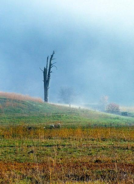 Tree Spirits 1 2 Photography Art | TheSpiritographer